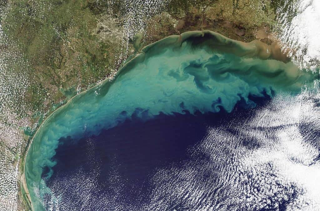 Gulf of Mexico Dead Zone Largest in over 30 Years