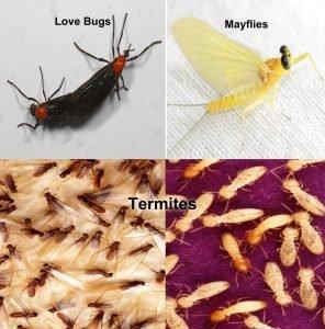Termites Love Bugs Mayflies